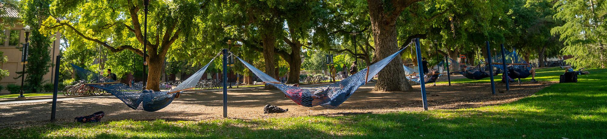 Students in hammocks on UC Davis quad